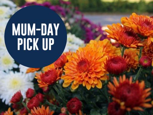 MUM-day – PVO Mum Sale Pick Up